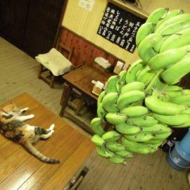 ♪~バナナが1本ありました~♪
